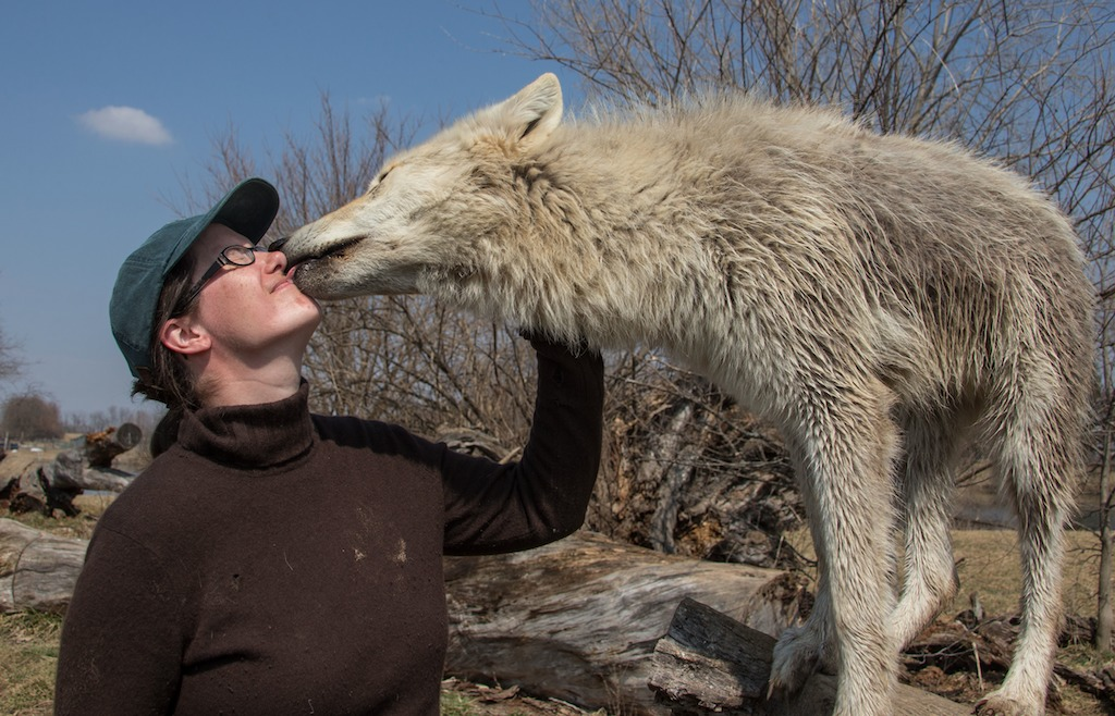 Jessica getting her nose examined by a wolf puppy.